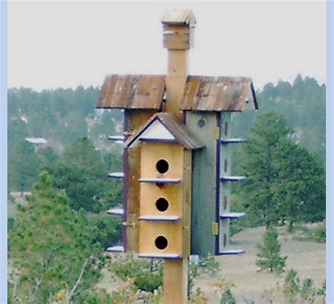 Purple Martin House by Purple Martin Bird House The Bird
