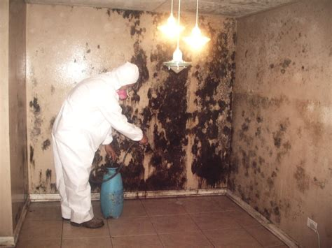 mold removal baltimore 443 961 2725