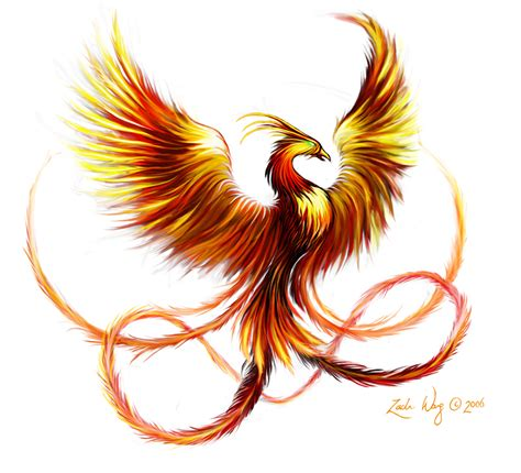 phoenix rising from ashes tattoo designs zach wong portfolio
