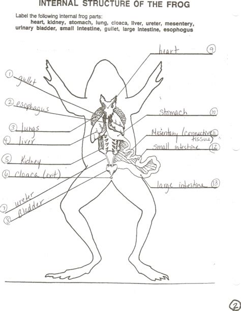 diagram of organs organ of a frog anatomy list