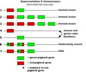 is color blindness genetic vision