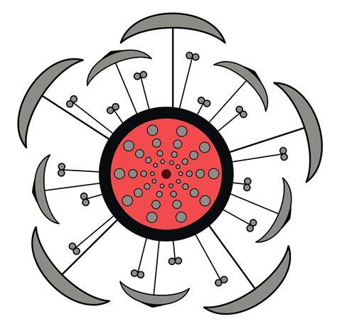 floral diagram of hibiscus morphology of flowering plants emedicalprep