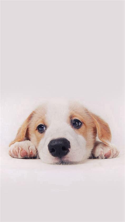 cute puppy dog pet iphone   wallpaper iphone