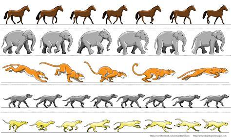 Imagenes En Movimiento Para Zootropo   armando ando pro by chucman ciclos de animales para tu