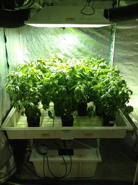 hydroponics grow lights nutrients indoor  season