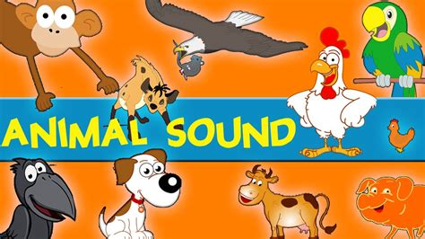 animals sounds sounds   animals song learn animal