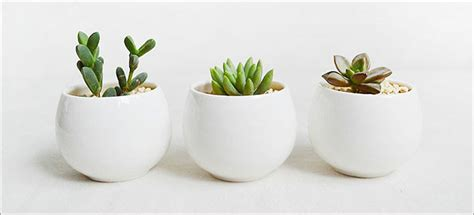 plant table 11 of the best plants to on your coffee table