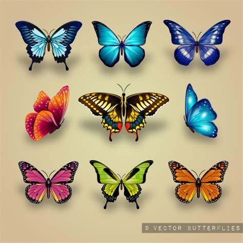 imagenes mariposas libres excelente colecci 243 n de mariposas descargar vectores gratis
