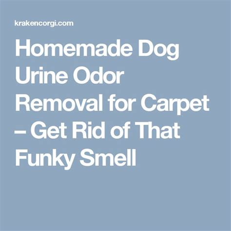how to get rid of dog odor in house homemade dog urine odor removal for carpet get rid of that funky smell reesee and peanut
