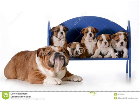 images of dogs and puppies and his puppies stock photos image 38177553