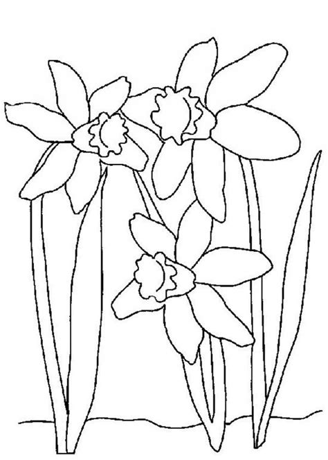 coloring pages daffodil flowers flowers coloring page beautiful blossoms