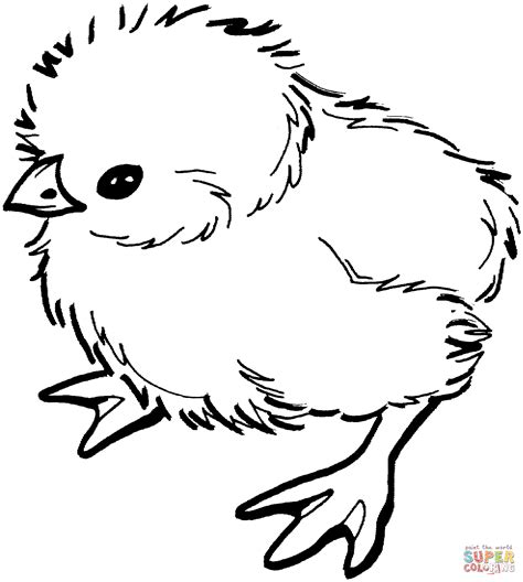 chicken coloring page free printable baby chick coloring page free printable coloring pages