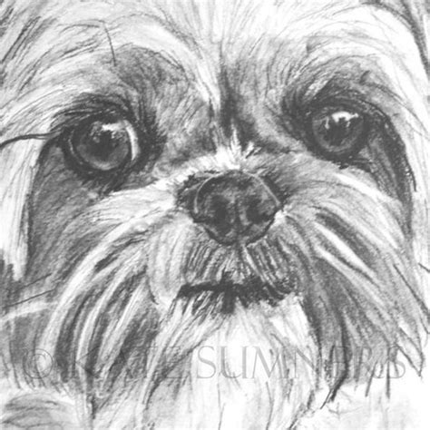 shih tzu drawings drawings and shih tzu on