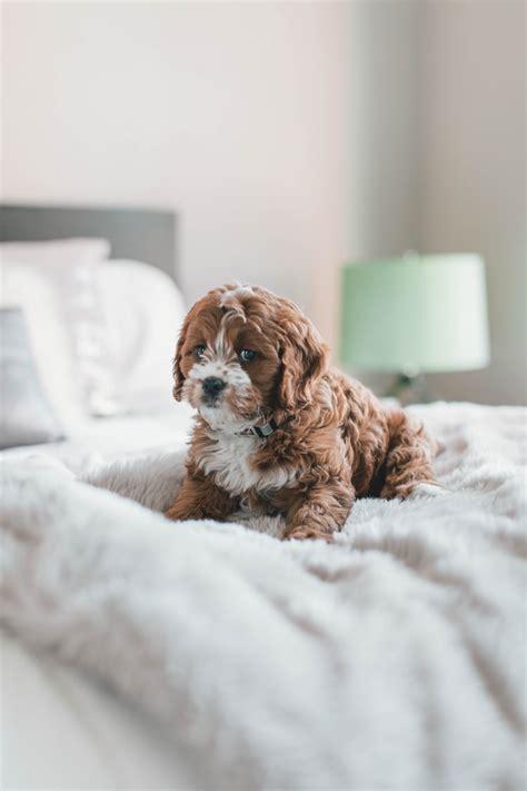 katowice puppy photo  adam grabek atagmakonts  unsplash