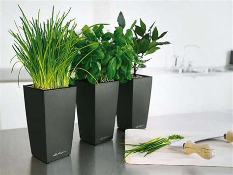modern plant pots black modern pots indoor kitchen planters placed in indoor