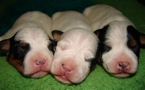 taking care of newborn puppies weaning newborn puppies 4k wallpapers
