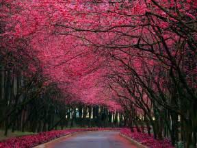 Nature beautiful desktop wallpaper nr 60382 by striker