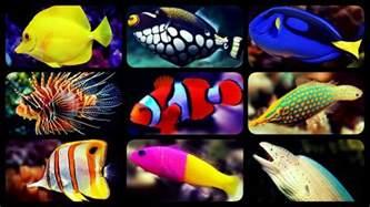 types of aquarium fish types of saltwater aquarium fish coral reef tank fish