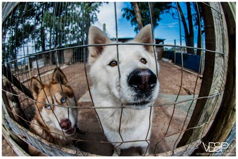 rescue centres support the uitsig animal rescue centre with the fluffy fundraiser festival this