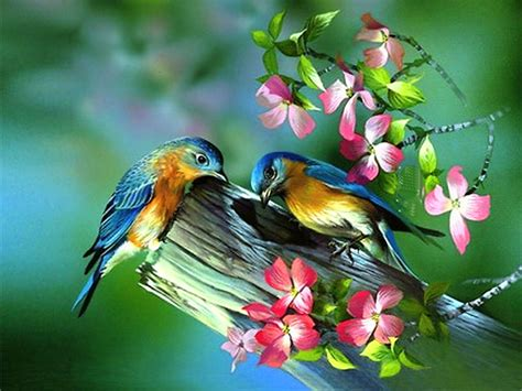 Purple Paint Law by Painting Of Birds In Spring Pictures Photos And Images