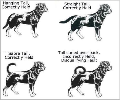 types of rottweilers de rasstandaard