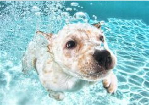 how to your to swim in the pool pet supplies for dogs and cats rosyandrocky how to teach your to swim in the pool
