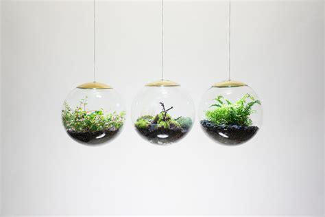 spherical hanging terrariums hanging terrarium