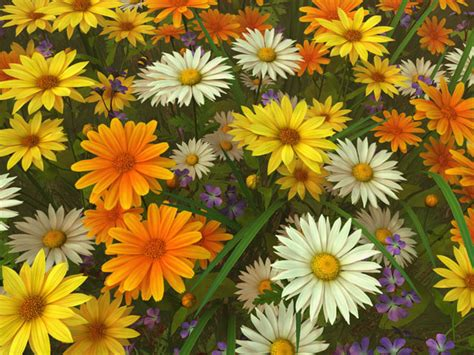 Buy Fireplace Screen by Nature 3d Screensavers Wildflowers A Calm Peaceful
