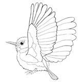 tody bird coloring page bird of paradise coloring page stock illustration