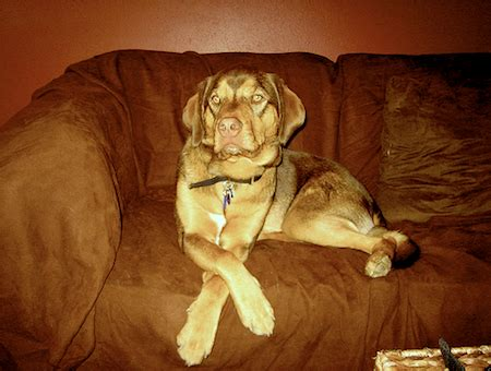 how to keep a dog off the couch how to train a dog to stay off the couch 4 sure fire tips