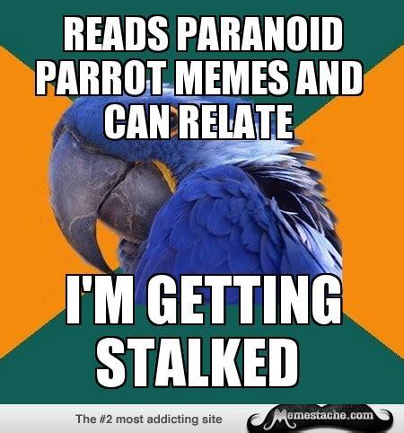 Paranoid Meme - paranoid meme 28 images paranoid parrot meme memes