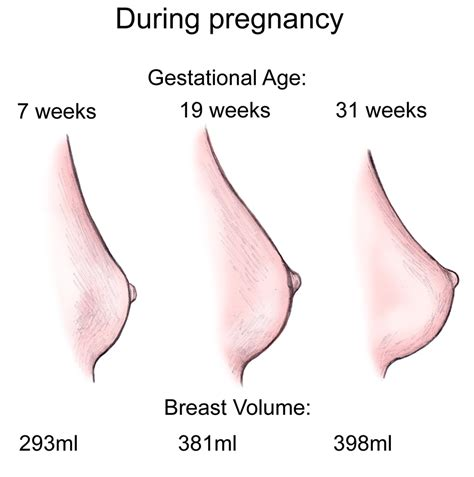 color changes during pregnancy breast changes during pregnancy new center