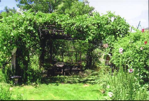 grape arbor arbor grape arbor tool galleries
