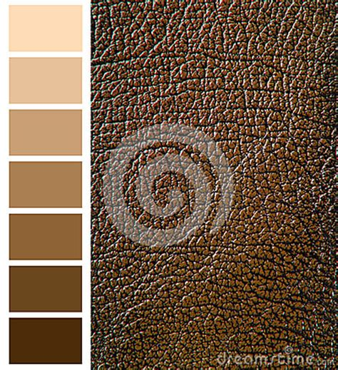 complementary color to brown brown color complimentary chart stock photo image 52520702