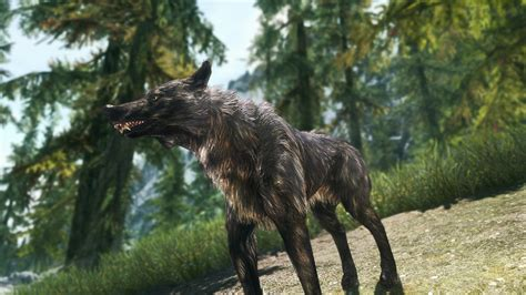 wolf in the forest the game the elder scrolls v skyrim
