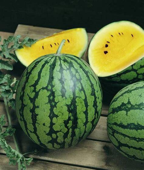 jual benih semangka kuning 5 biji non retail bibit