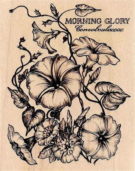 morning glory flower tattoo designs 1000 images about tats on watercolors