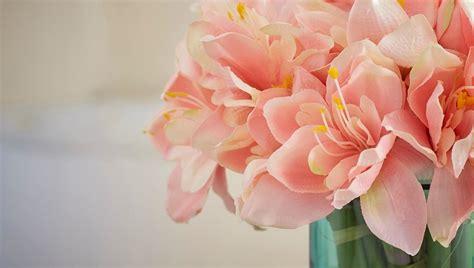edg fiori fiori e piante papaveri e papere