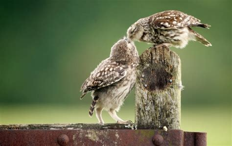 owl lover owls love wallpapers
