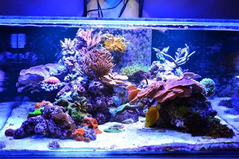 tips and tricks on creating amazing aquascapes page 31