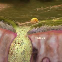 colored mucus what is mucus