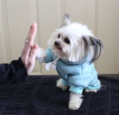 norbert the norbert the therapy