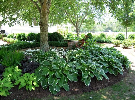 small trees and shrubs for landscaping in front yard hot landscaping hosta gardens on pinterest plants shade garden and