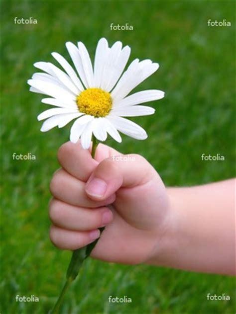 un fiore per te memoria novembre 2008