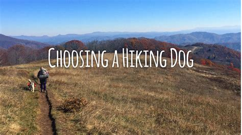 best hiking dogs hiking with dogs 101 choosing a hiking the trek