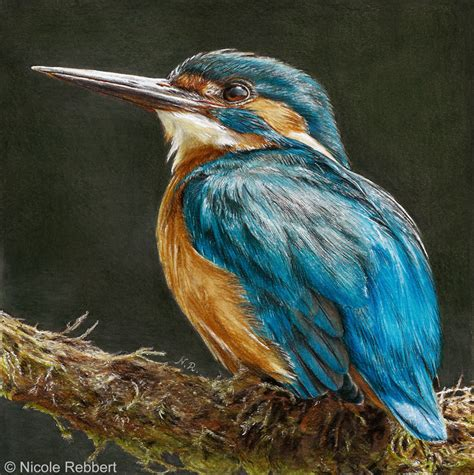 kingfisher drawing by quelchii on deviantart