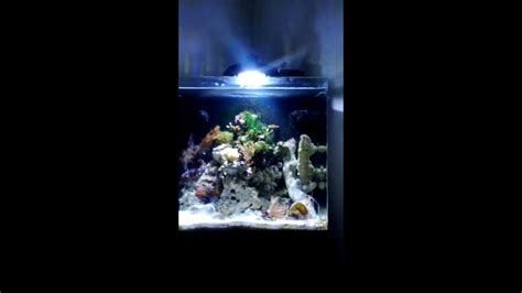 Tv Led Aqua Le32aqt6500 Aqua One Aquanano 40 Eco Aqua 30w 14000k Led Nano Marine Reef Tank