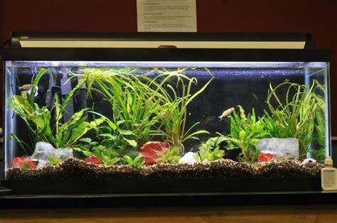 aquarium design hd best 25 fish tank stand ideas on pinterest tank stand