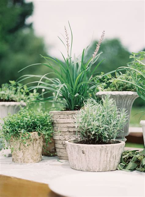 organic potted plant centerpieces wedding