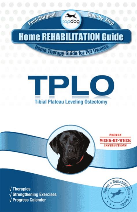 tplo home rehab guide topdoghealthcom